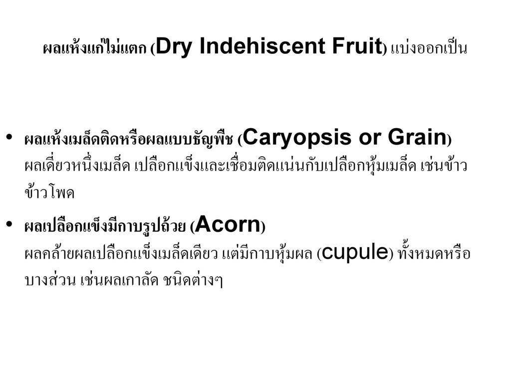 ผลแห้งแก่ไม่แตก (Dry Indehiscent Fruit) แบ่งออกเป็น