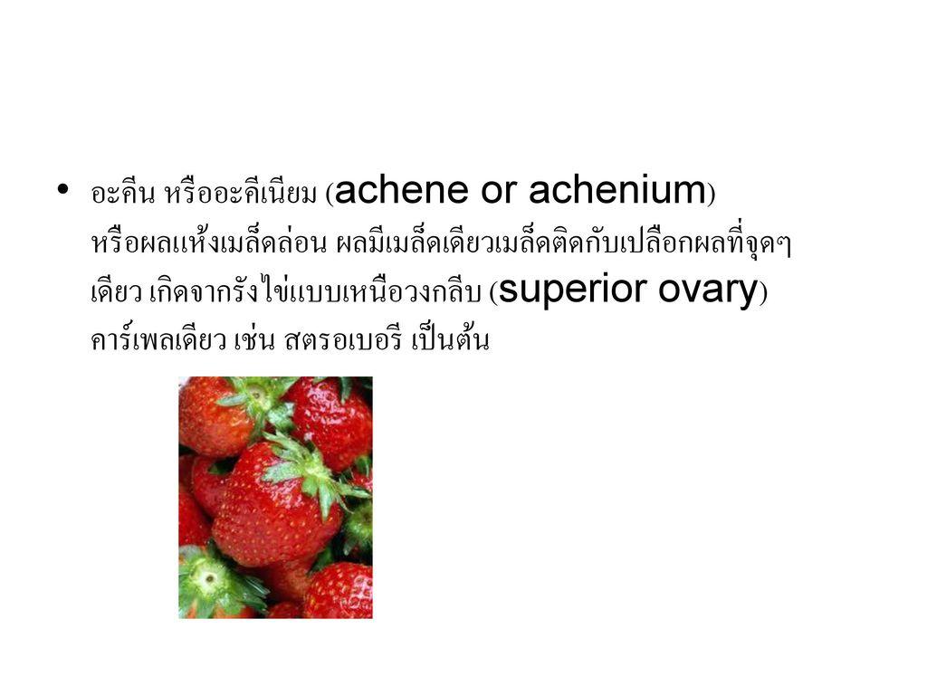 อะคีน หรืออะคีเนียม (achene or achenium) หรือผลแห้งเมล็ดล่อน ผลมีเมล็ดเดียวเมล็ดติดกับเปลือกผลที่จุดๆ เดียว เกิดจากรังไข่แบบเหนือวงกลีบ (superior ovary) คาร์เพลเดียว เช่น สตรอเบอรี เป็นต้น