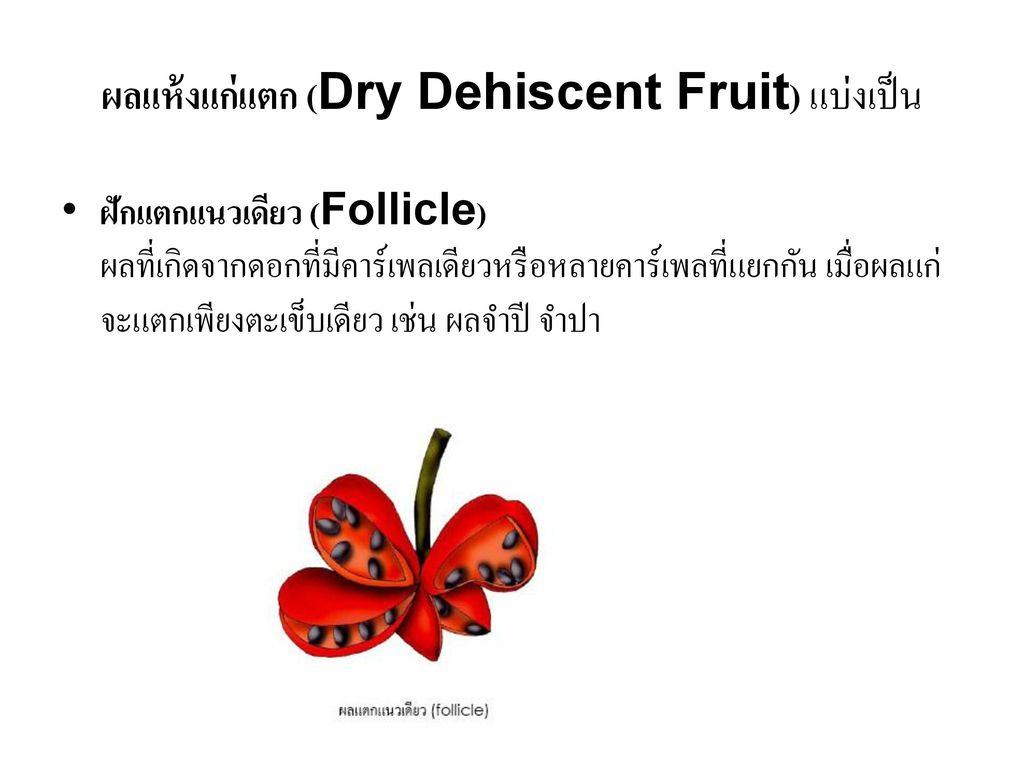 ผลแห้งแก่แตก (Dry Dehiscent Fruit) แบ่งเป็น