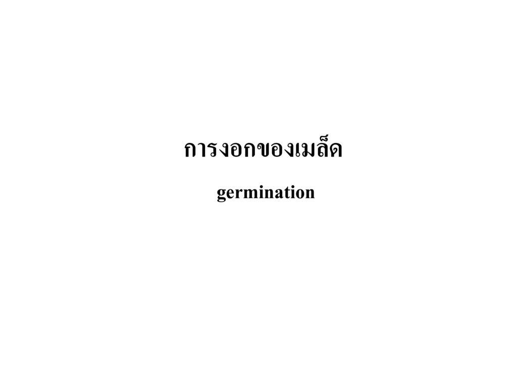 การงอกของเมล็ด germination