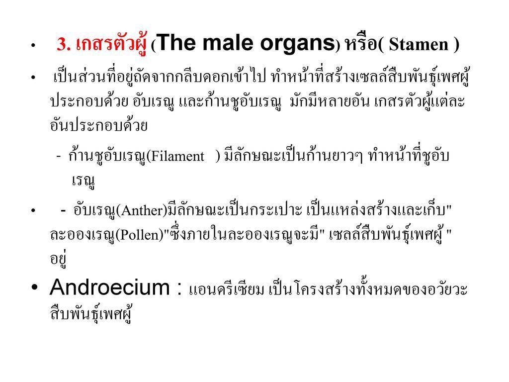 3. เกสรตัวผู้ (The male organs) หรือ( Stamen )