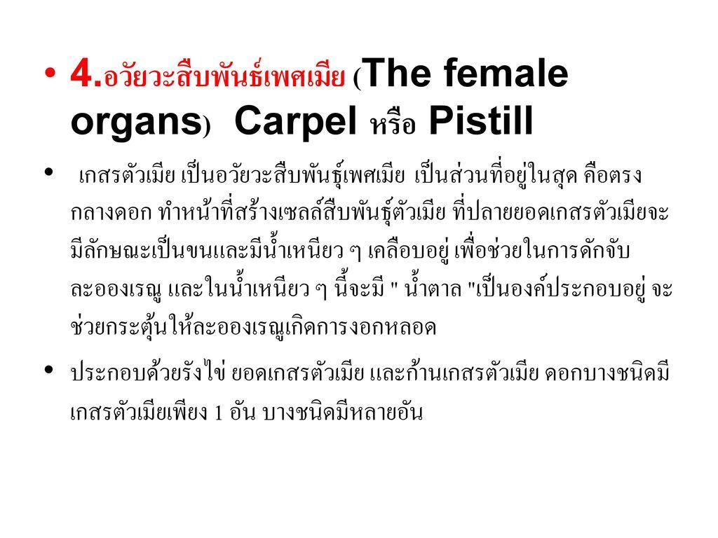 4.อวัยวะสืบพันธ์เพศเมีย (The female organs) Carpel หรือ Pistill