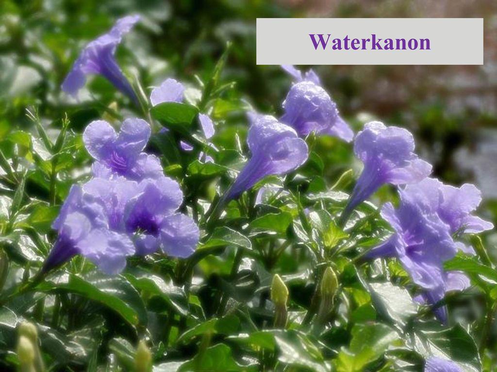 Waterkanon