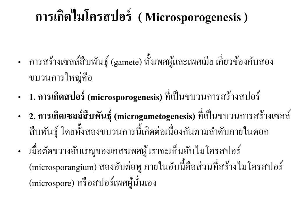 การเกิดไมโครสปอร์ ( Microsporogenesis )