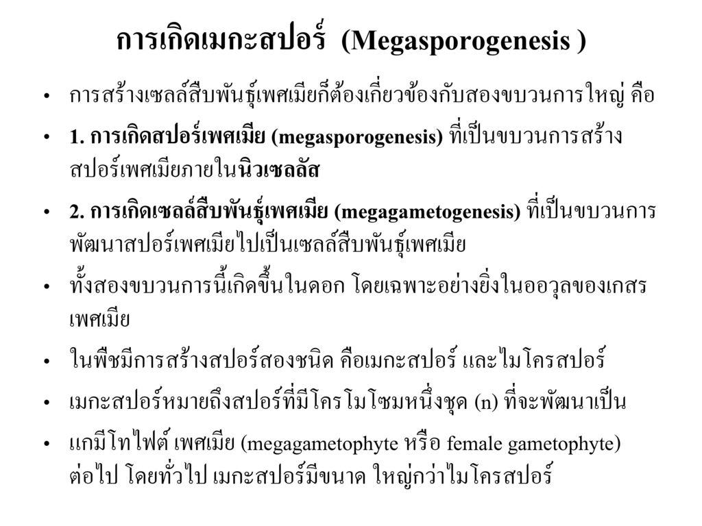 การเกิดเมกะสปอร์ (Megasporogenesis )