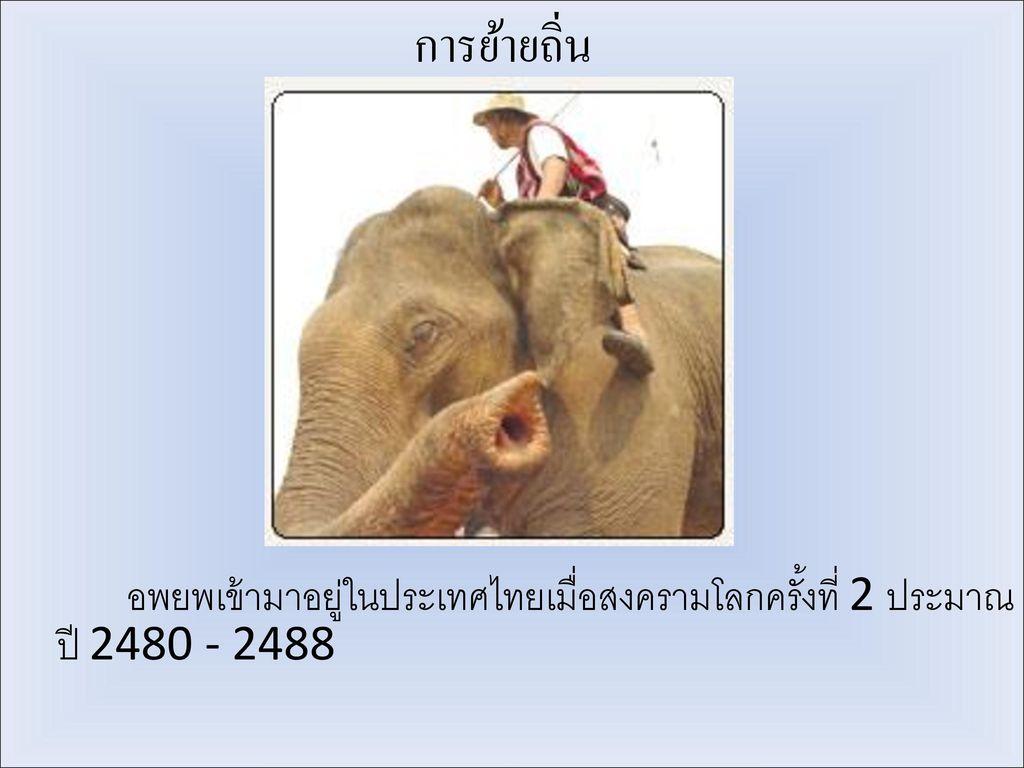 การย้ายถิ่น อพยพเข้ามาอยู่ในประเทศไทยเมื่อสงครามโลกครั้งที่ 2 ประมาณปี 2480 - 2488