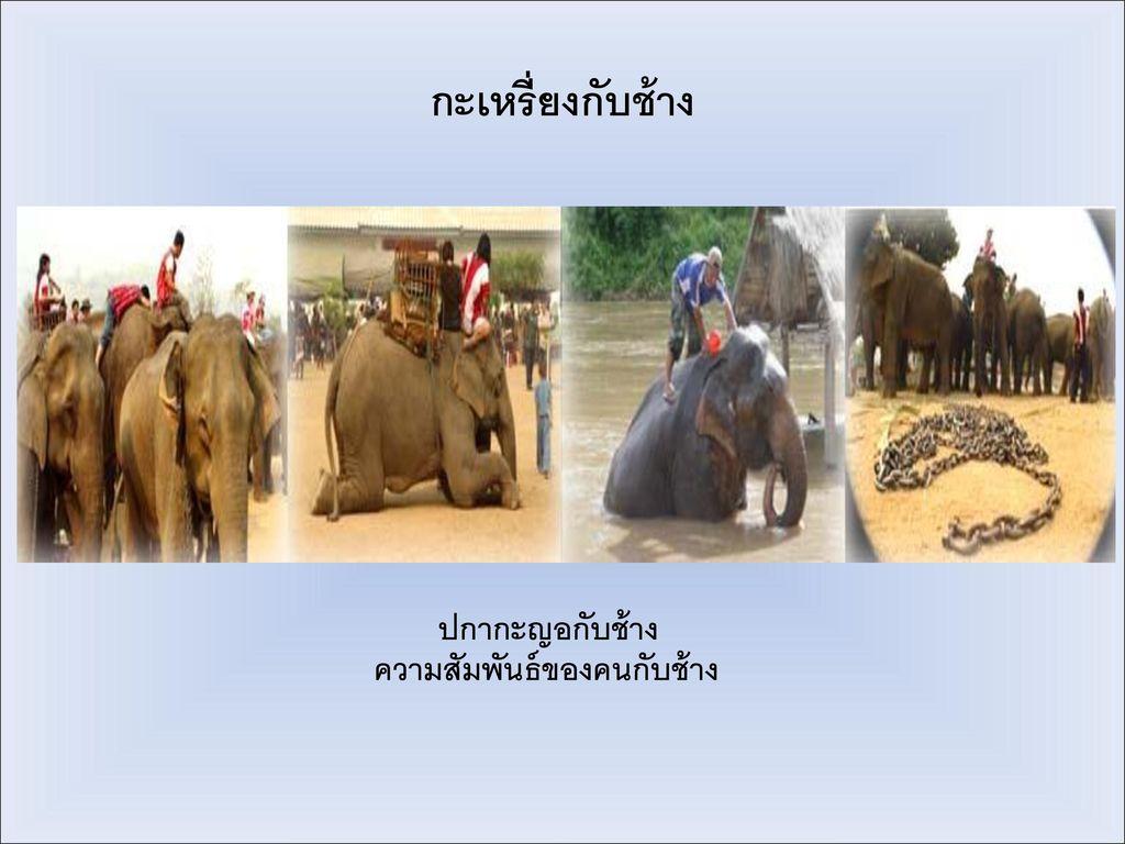 ปกากะญอกับช้าง ความสัมพันธ์ของคนกับช้าง