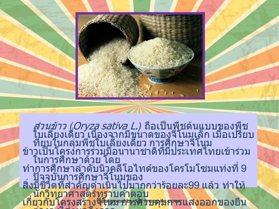 ส่วนข้าว (Oryza sativa L