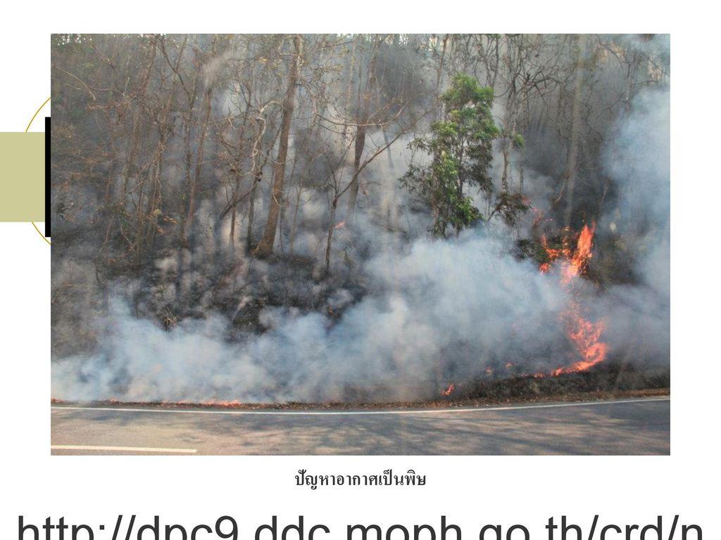 ปัญหาอากาศเป็นพิษ http://dpc9.ddc.moph.go.th/crd/news/2555/03_06_sulfur.html