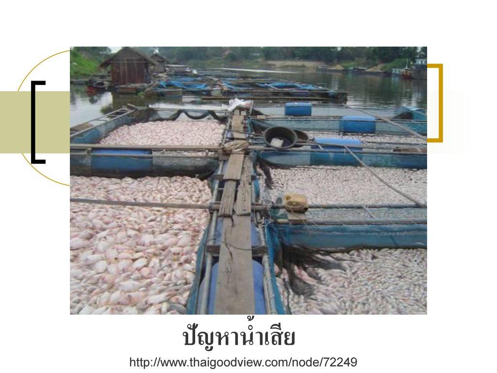 ปัญหาน้ำเสีย http://www.thaigoodview.com/node/72249