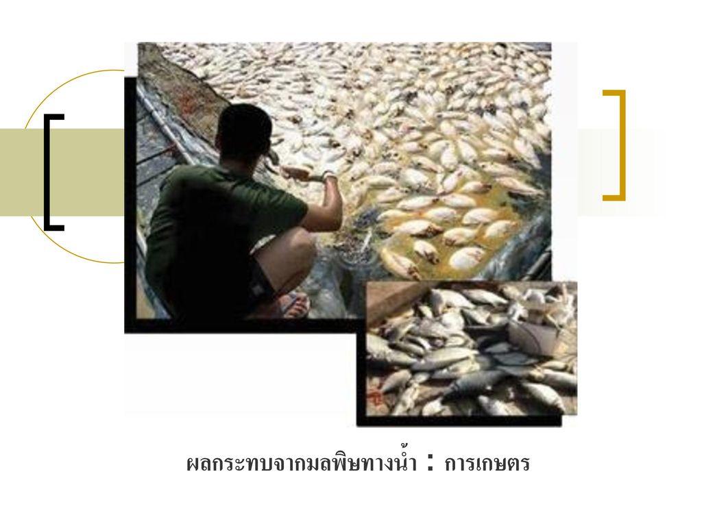 ผลกระทบจากมลพิษทางน้ำ : การเกษตร