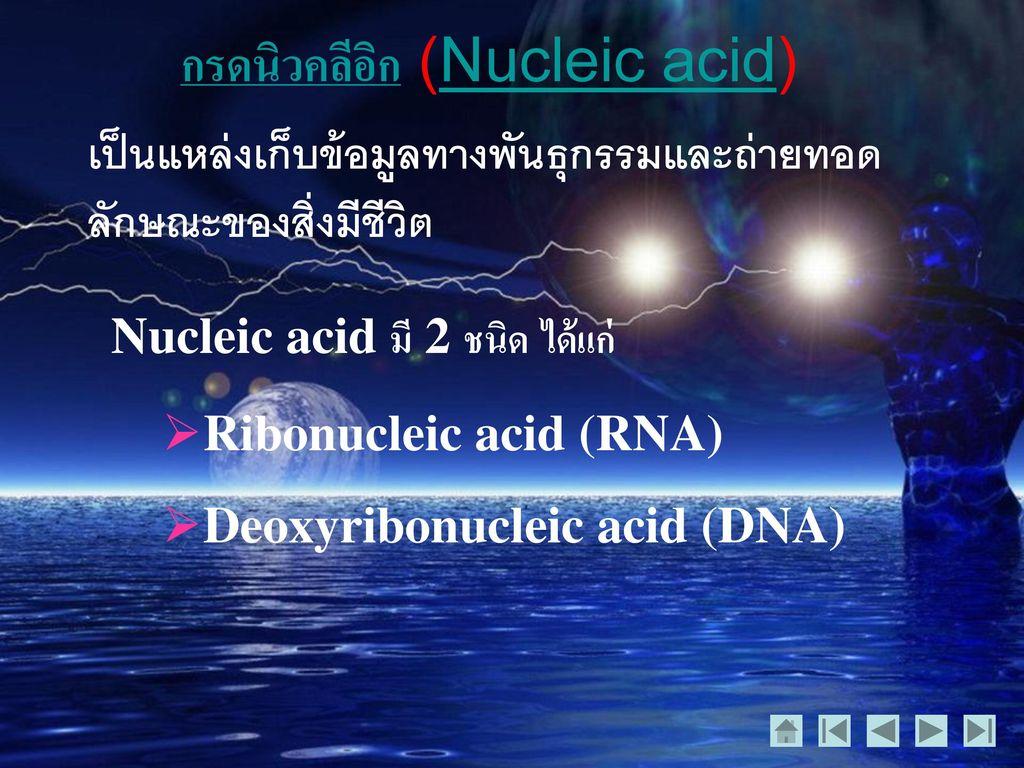 กรดนิวคลีอิก (Nucleic acid)