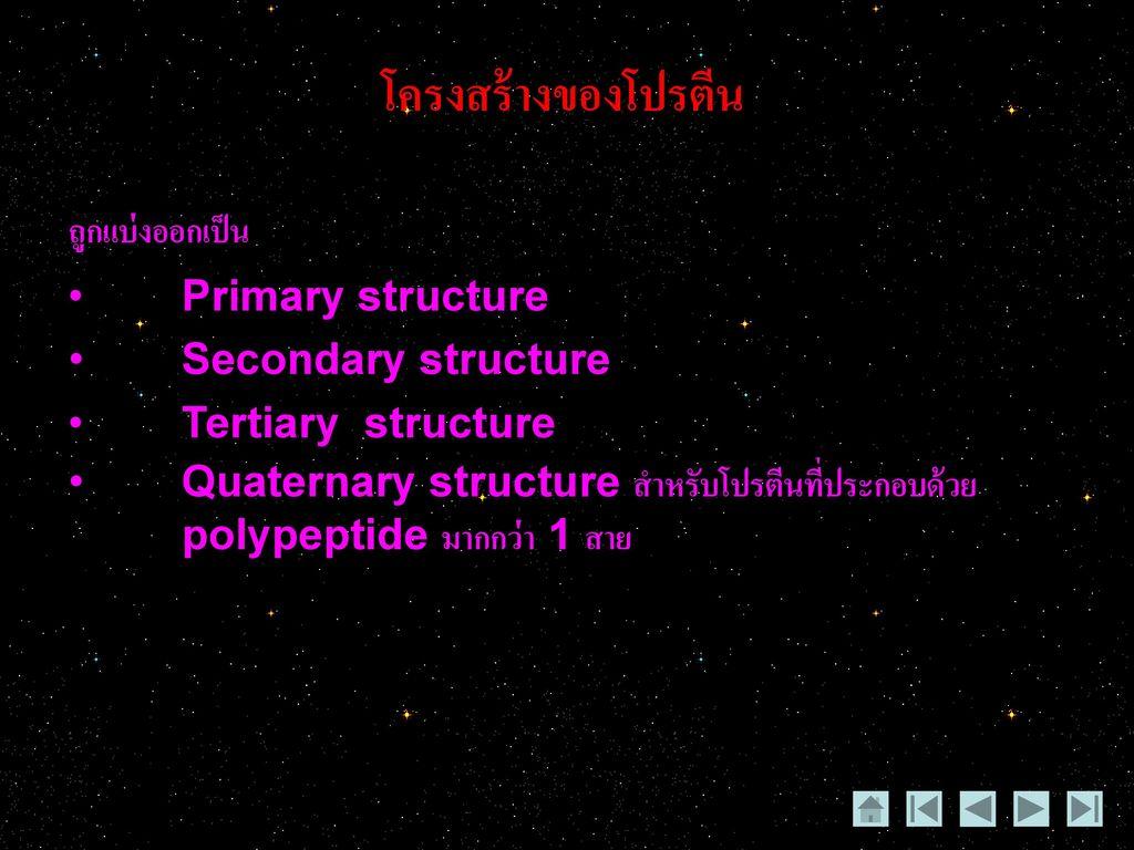 โครงสร้างของโปรตีน ถูกแบ่งออกเป็น Primary structure