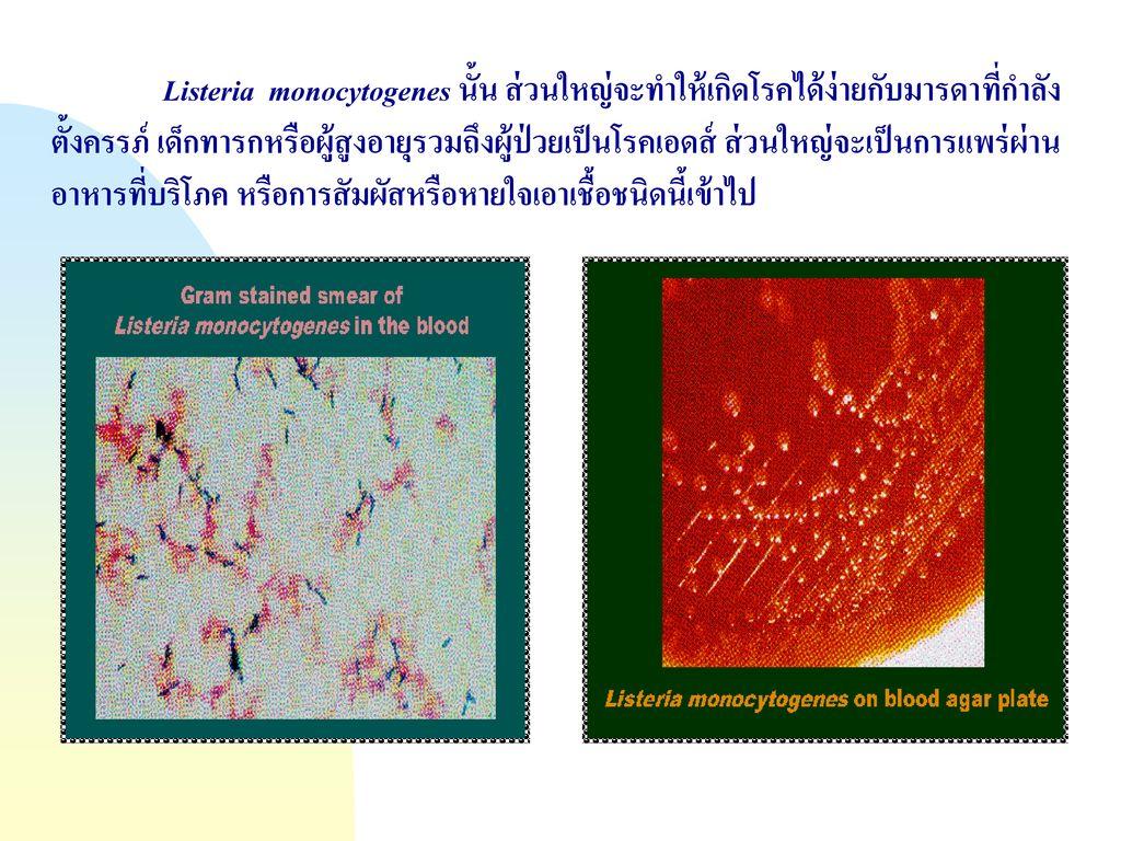 Listeria monocytogenes นั้น ส่วนใหญ่จะทำให้เกิดโรคได้ง่ายกับมารดาที่กำลังตั้งครรภ์ เด็กทารกหรือผู้สูงอายุรวมถึงผู้ป่วยเป็นโรคเอดส์ ส่วนใหญ่จะเป็นการแพร่ผ่านอาหารที่บริโภค หรือการสัมผัสหรือหายใจเอาเชื้อชนิดนี้เข้าไป