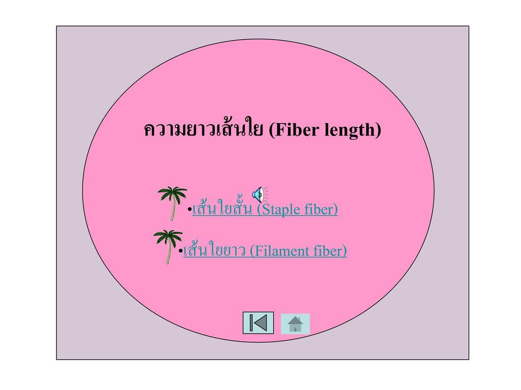ความยาวเส้นใย (Fiber length)