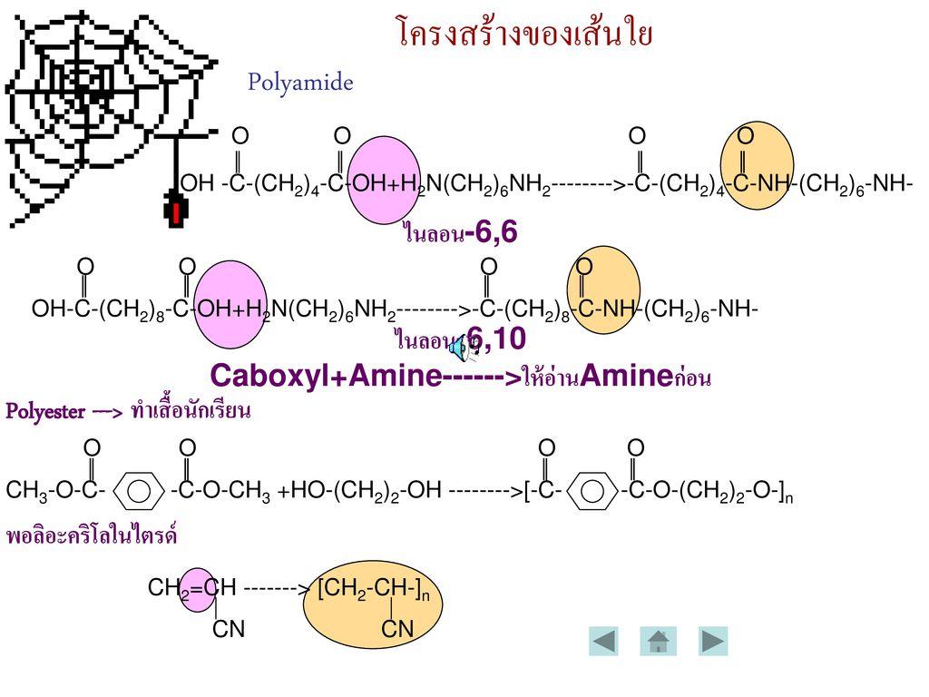 Caboxyl+Amine------>ให้อ่านAmineก่อน