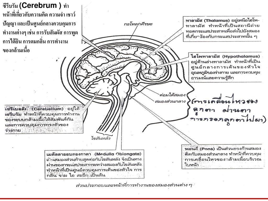 The cerebrum controls your…………