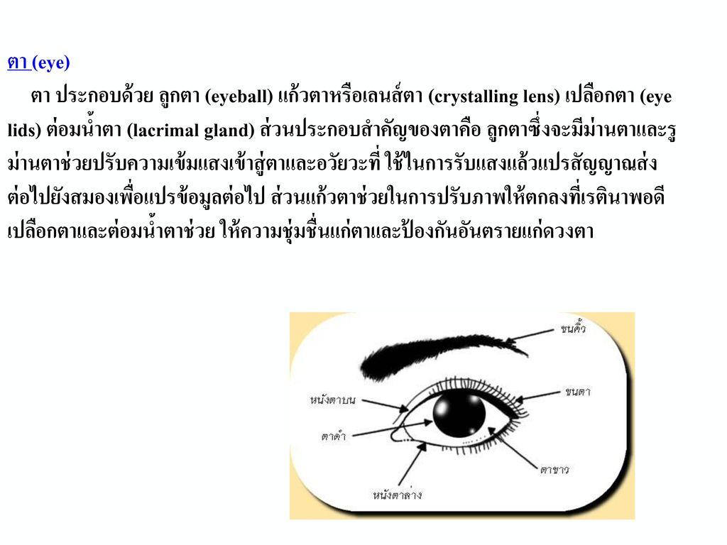 ที่มา : http://www.vcharkarn.com/