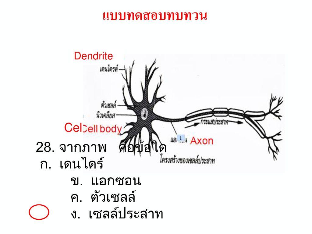 แบบทดสอบทบทวน 21. อวัยวะที่ทำหน้าที่คล้ายเครื่องกรอง หรือเป็นอวัยวะขับถ่ายทั้งหมด คืออะไร. ก. ไต ปอด.