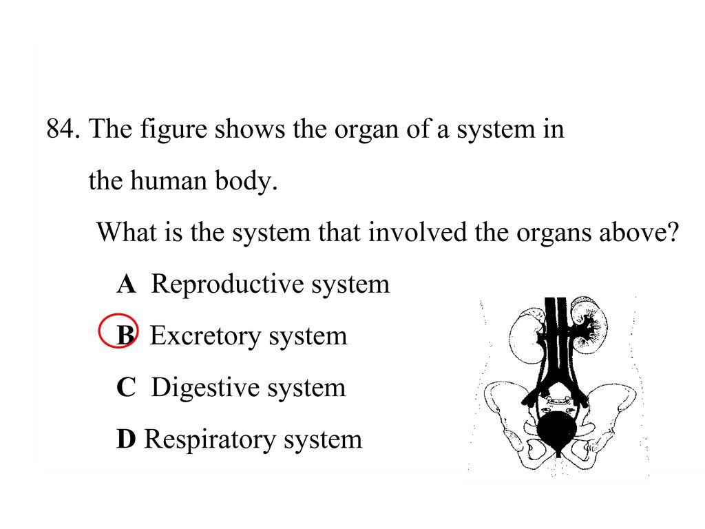 แบบทดสอบทบทวน 28. จากภาพ คือข้อใด ก. เดนไดร์ ข. แอกซอน ค. ตัวเซลล์