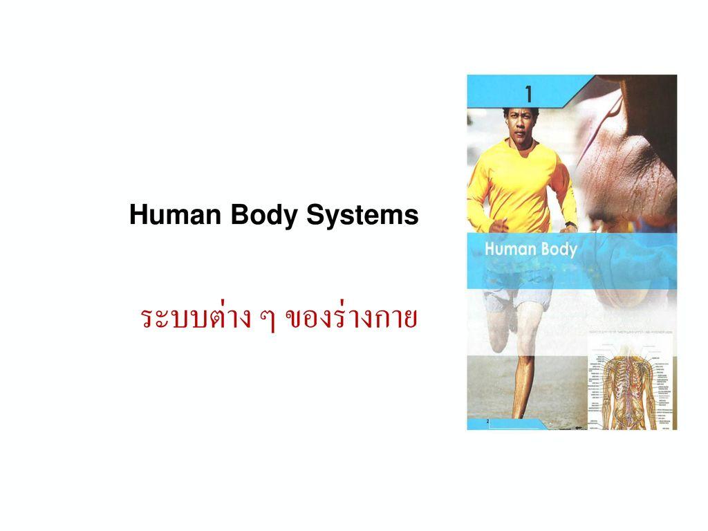 Human Body Systems ระบบต่าง ๆ ของร่างกาย