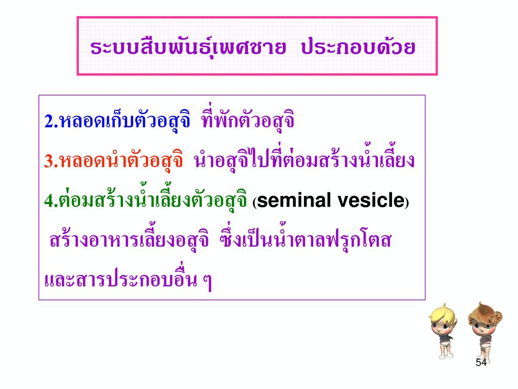 Reproductive System (ระบบสืบพันธุ์)