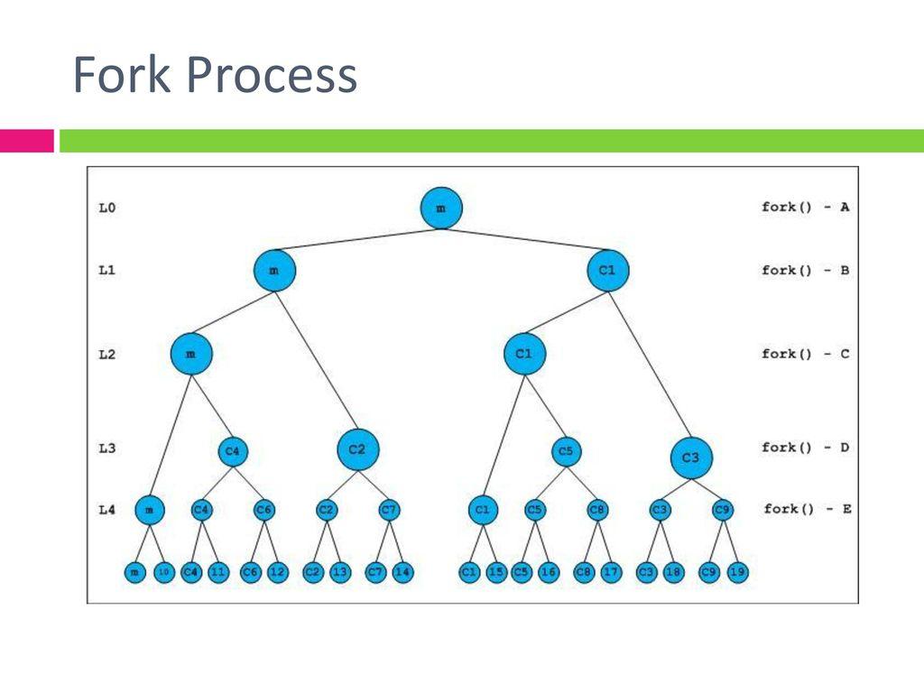 Fork Process