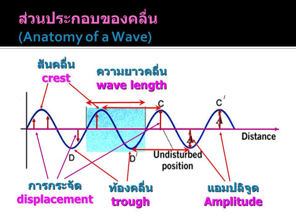 ส่วนประกอบของคลื่น (Anatomy of a Wave)