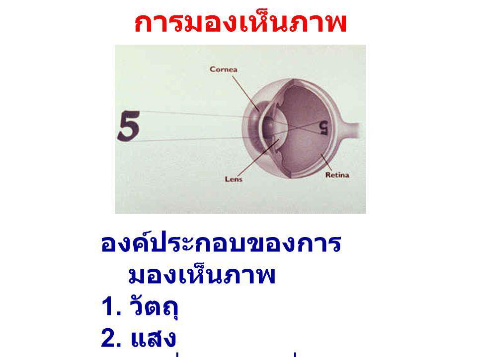 การมองเห็นภาพ องค์ประกอบของการมองเห็นภาพ 1. วัตถุ 2. แสง