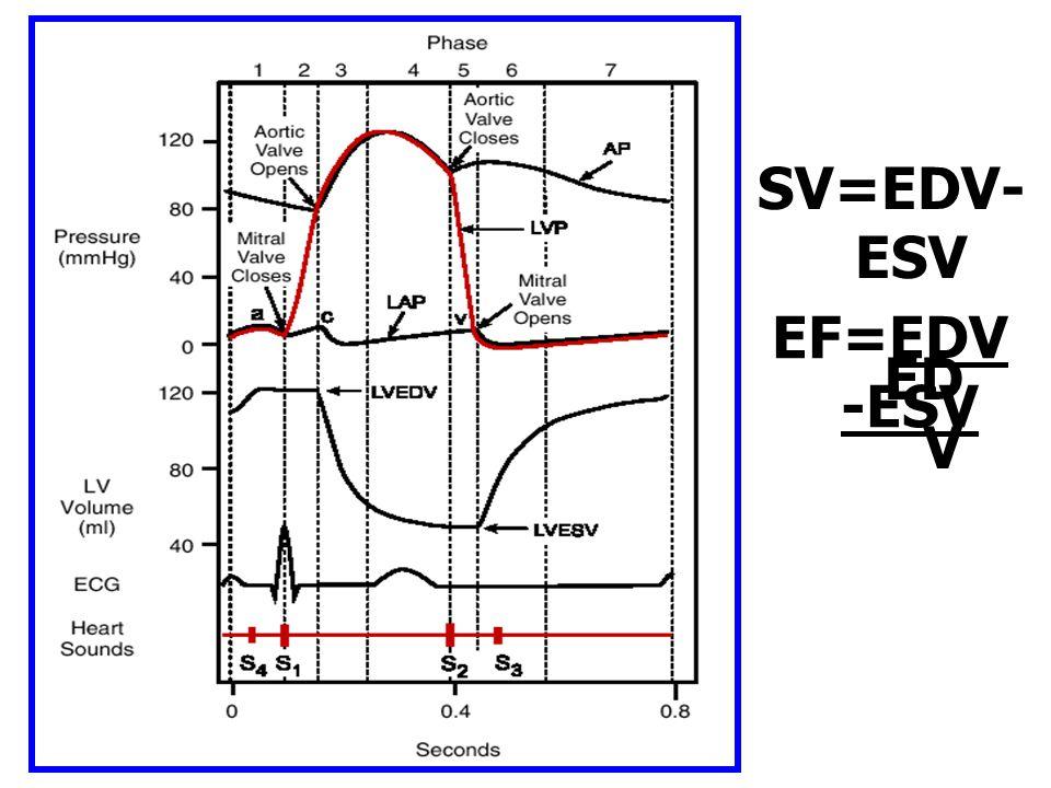 SV=EDV-ESV EF=EDV-ESV EDV