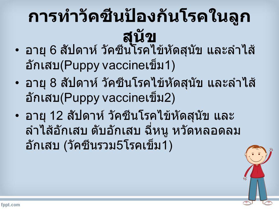 การทำวัคซีนป้องกันโรคในลูกสุนัข
