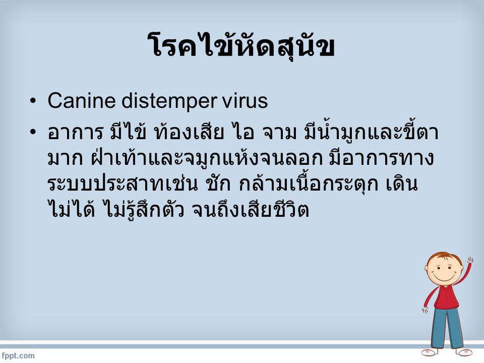 โรคไข้หัดสุนัข Canine distemper virus