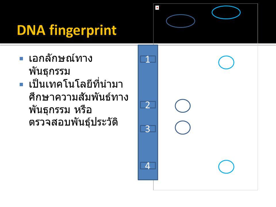 DNA fingerprint เอกลักษณ์ทางพันธุกรรม 1