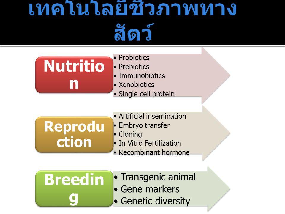 เทคโนโลยีชีวภาพทางสัตว์