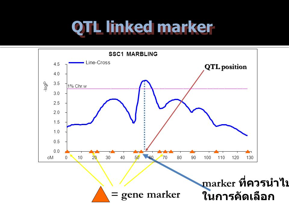 QTL linked marker marker ที่ควรนำไปใช้ ในการคัดเลือก = gene marker