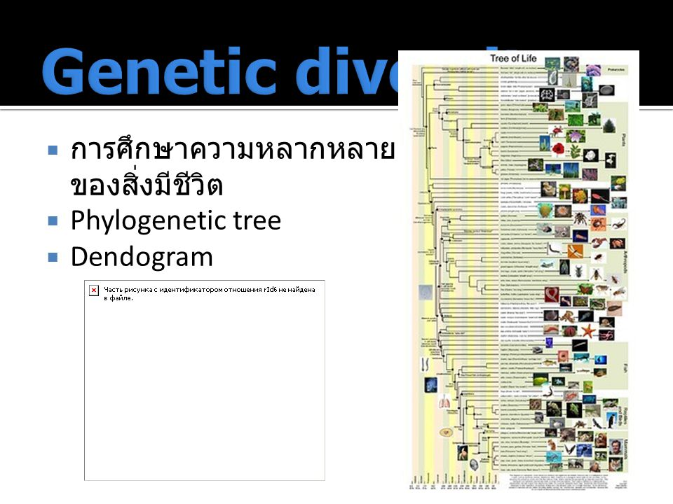 Genetic diversity การศึกษาความหลากหลายของสิ่งมีชีวิต Phylogenetic tree