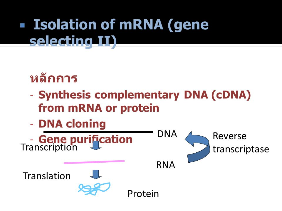 Isolation of mRNA (gene selecting II)