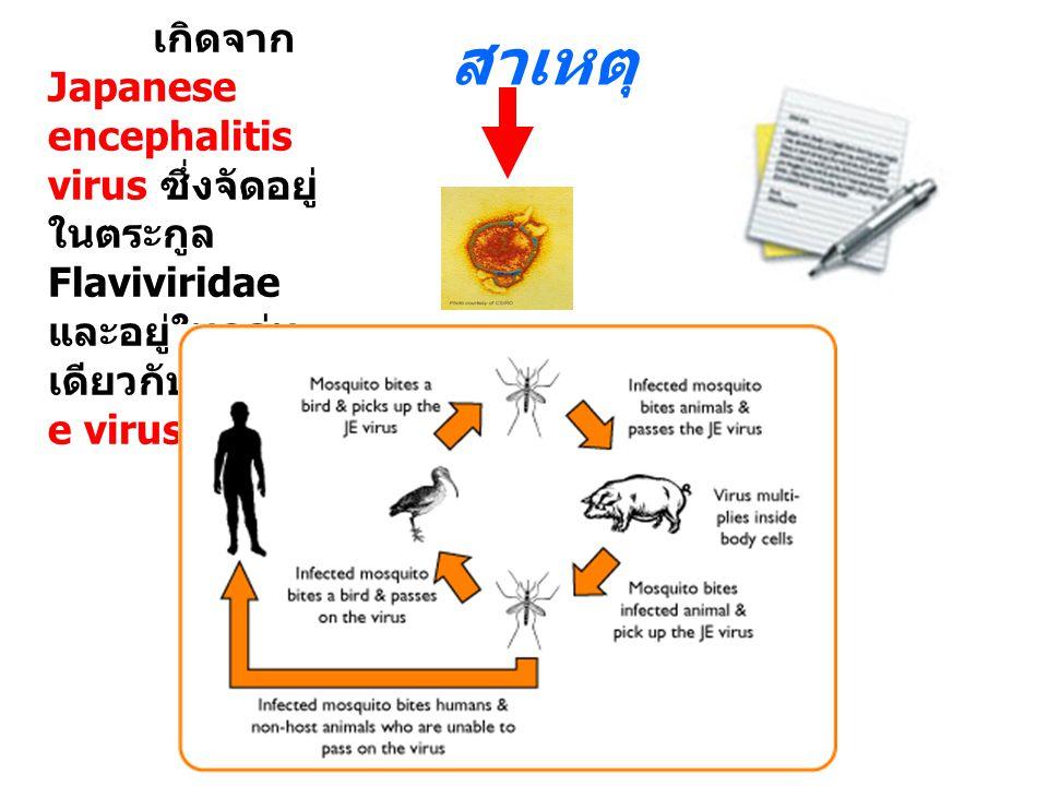 สาเหตุ เกิดจาก Japanese encephalitis virus ซึ่งจัดอยู่ในตระกูล Flaviviridae และอยู่ในกลุ่มเดียวกับ dengue virus.