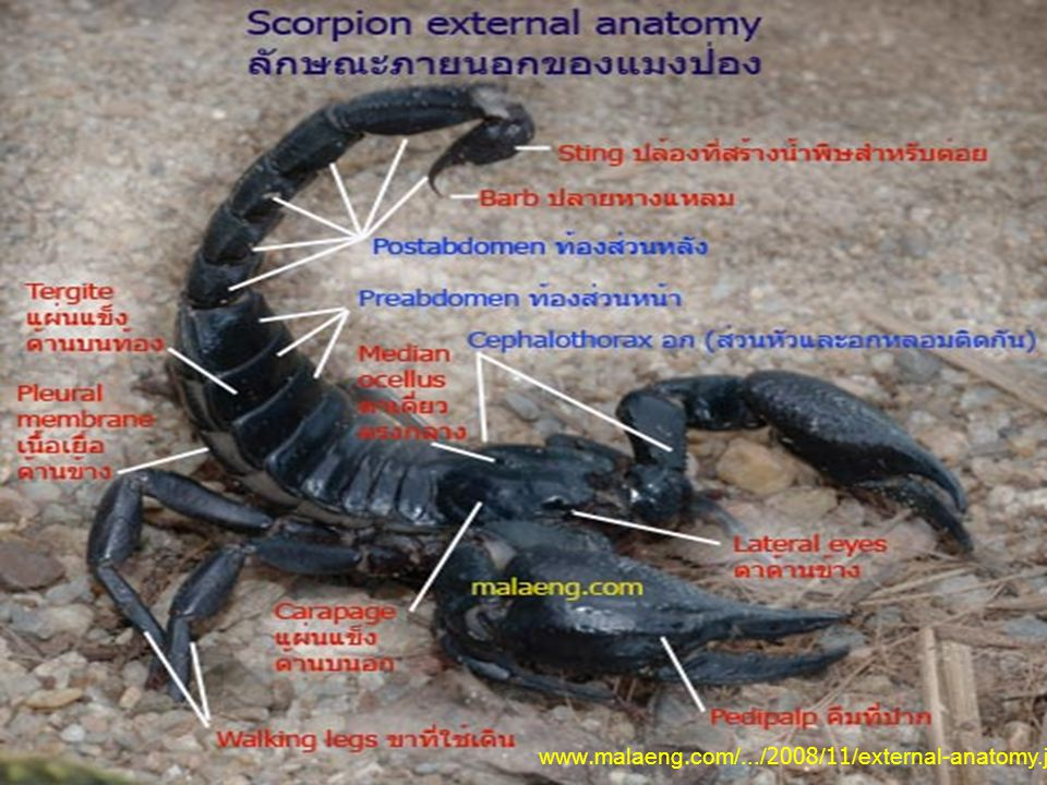 www.malaeng.com/.../2008/11/external-anatomy.jpg