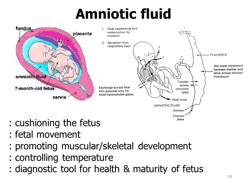 Amniotic fluid : cushioning the fetus : fetal movement