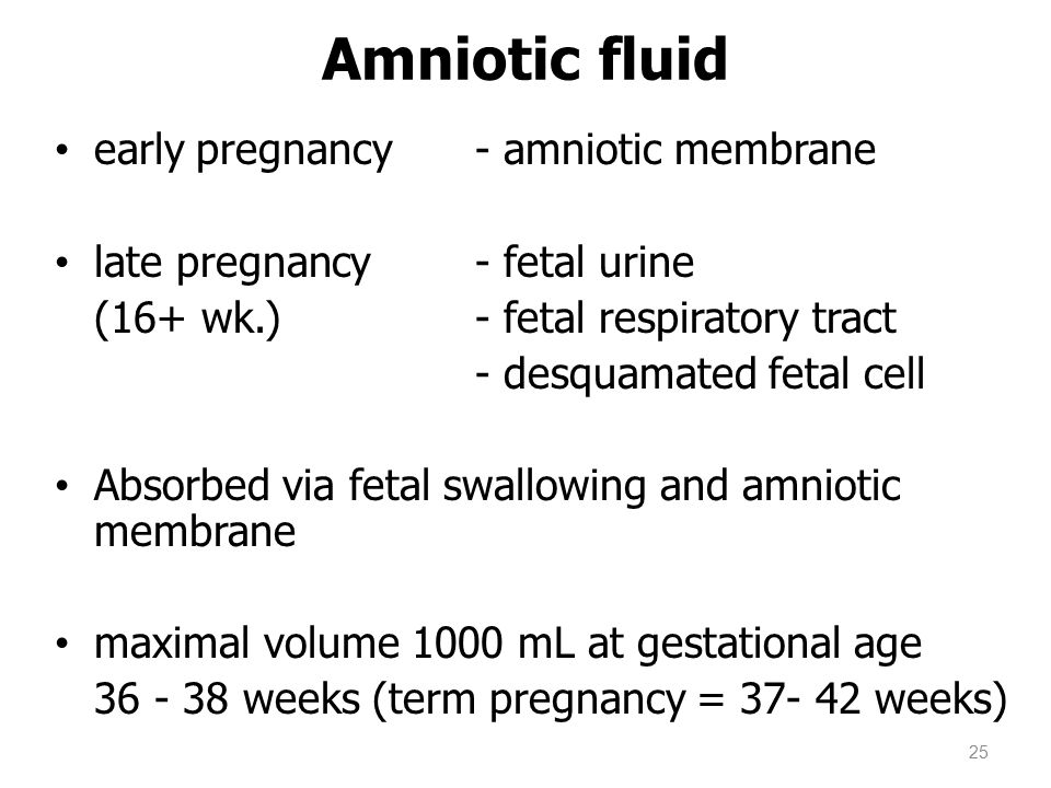Amniotic fluid early pregnancy - amniotic membrane