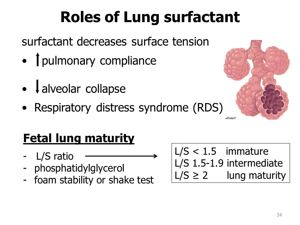 Roles of Lung surfactant