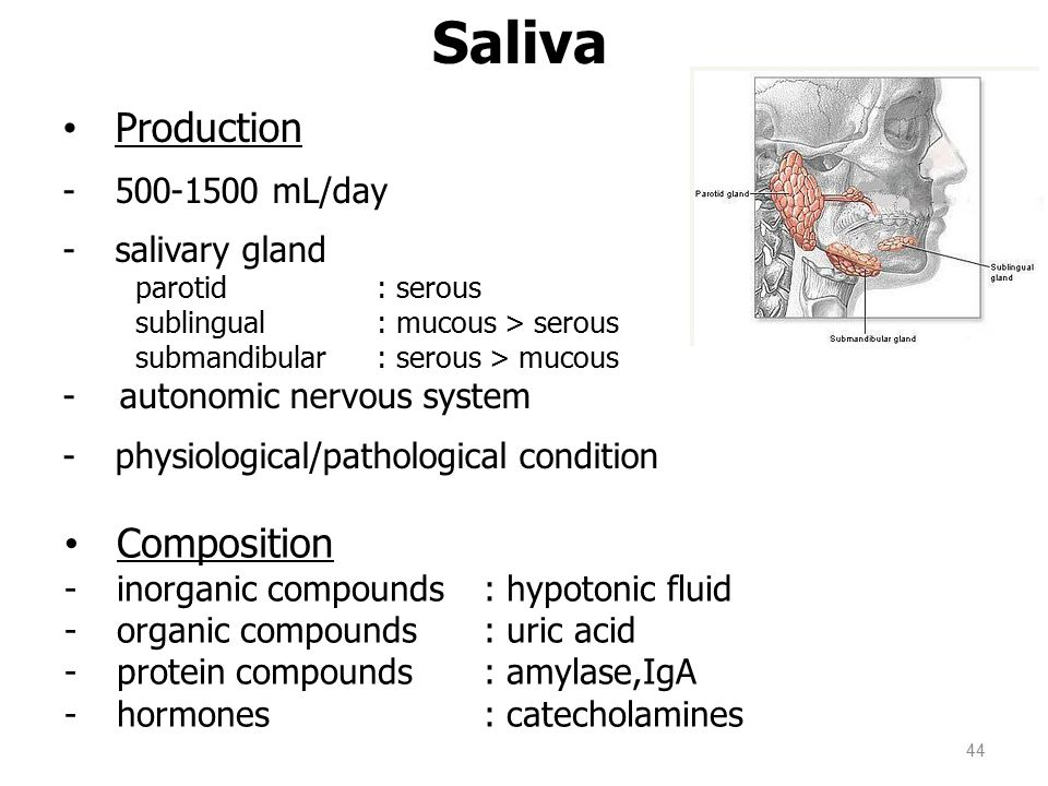 Saliva Production Composition 500-1500 mL/day salivary gland