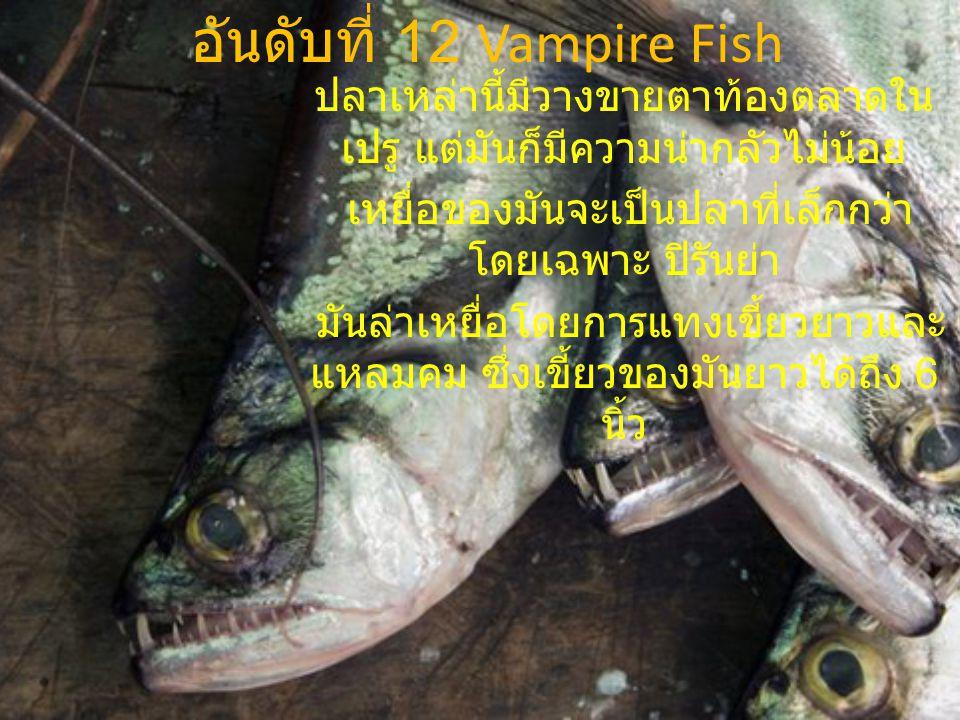 อันดับที่ 12 Vampire Fish