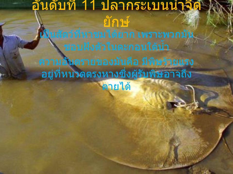 อันดับที่ 11 ปลากระเบนน้ำจืดยักษ์