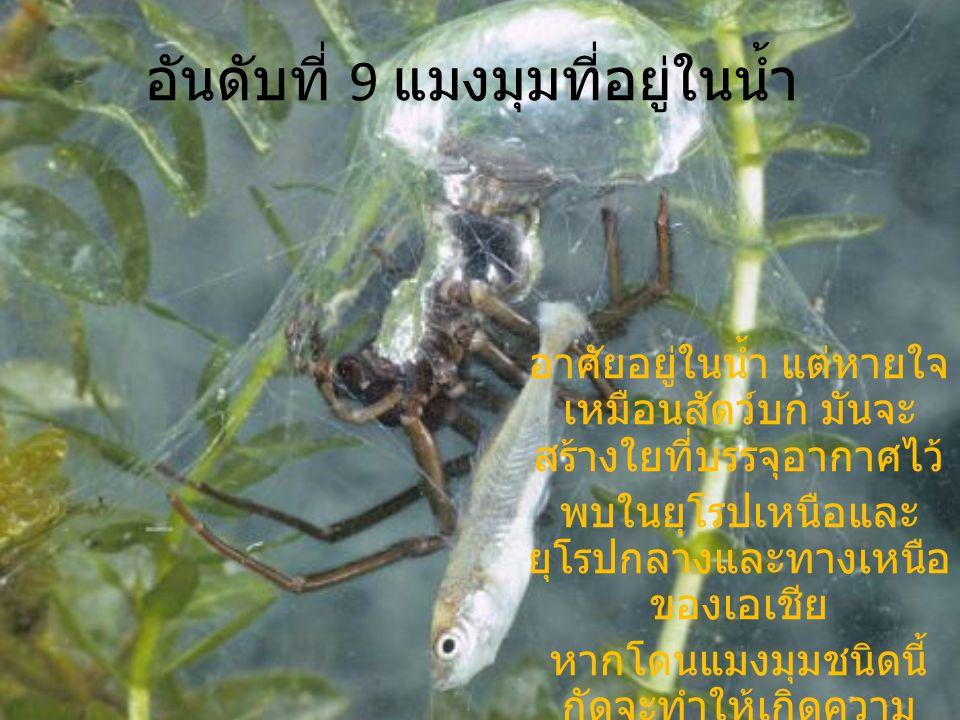 อันดับที่ 9 แมงมุมที่อยู่ในน้ำ