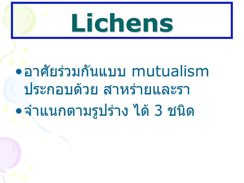 Lichens อาศัยร่วมกันแบบ mutualism ประกอบด้วย สาหร่ายและรา