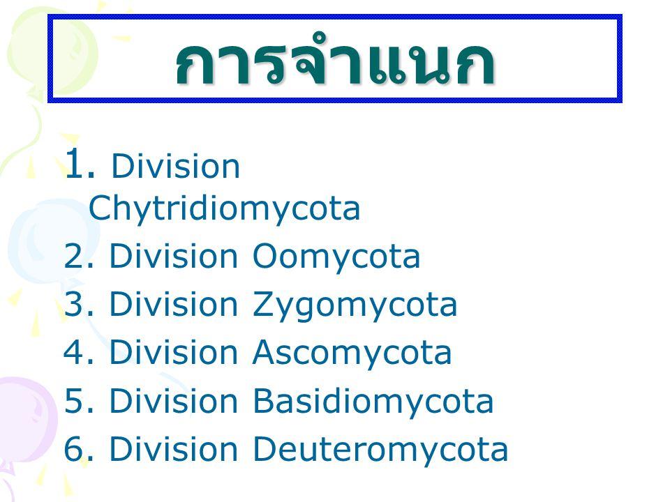 การจำแนก 1. Division Chytridiomycota 2. Division Oomycota