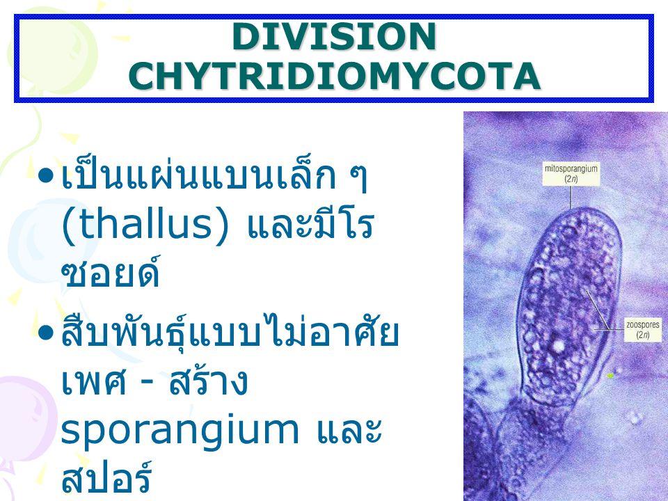 DIVISION CHYTRIDIOMYCOTA