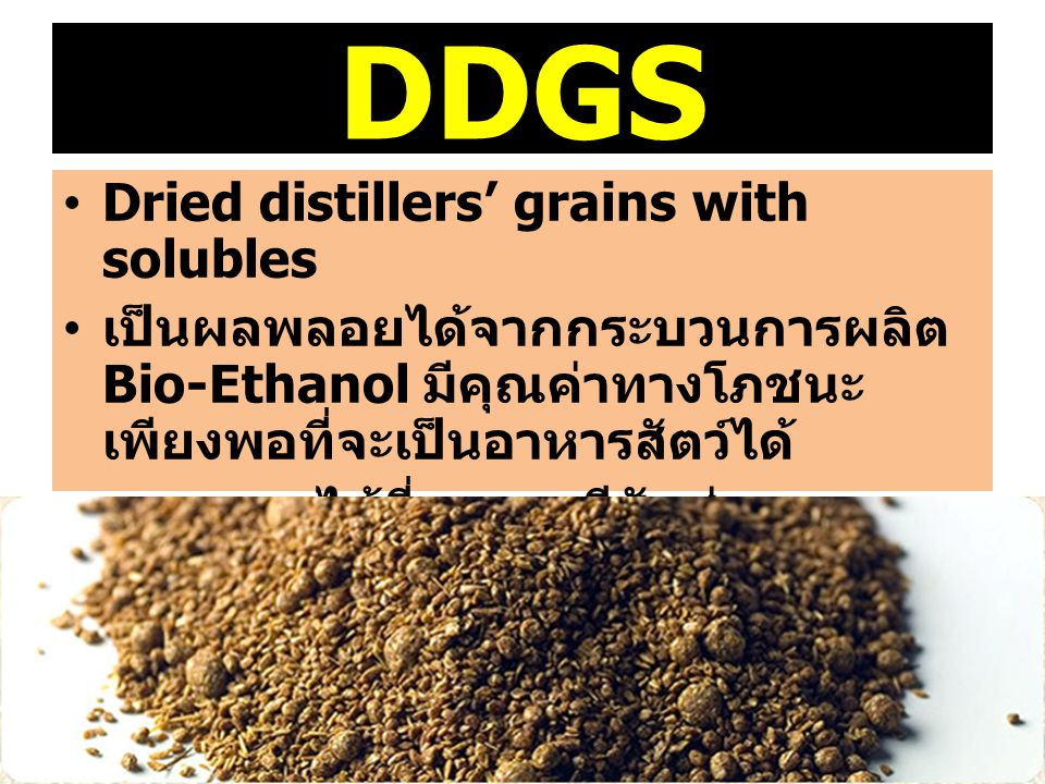 DDGS Dried distillers' grains with solubles